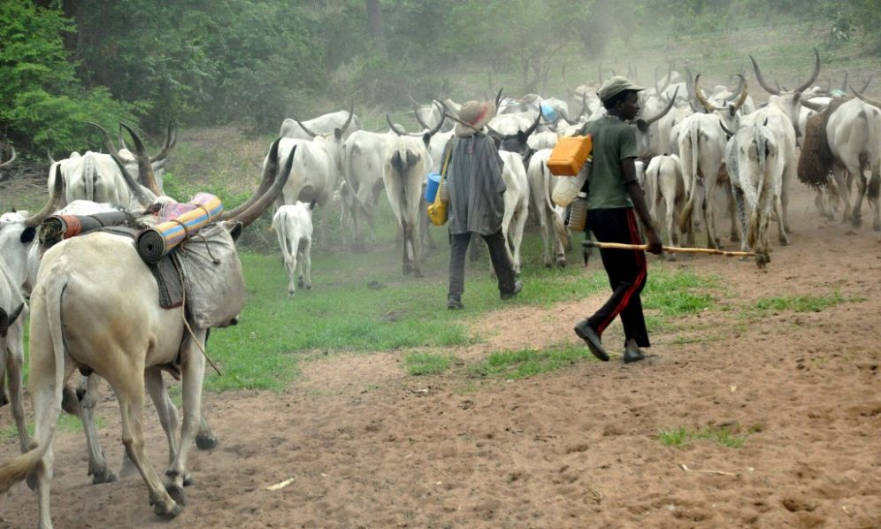 Herdsmen with their head of cattle